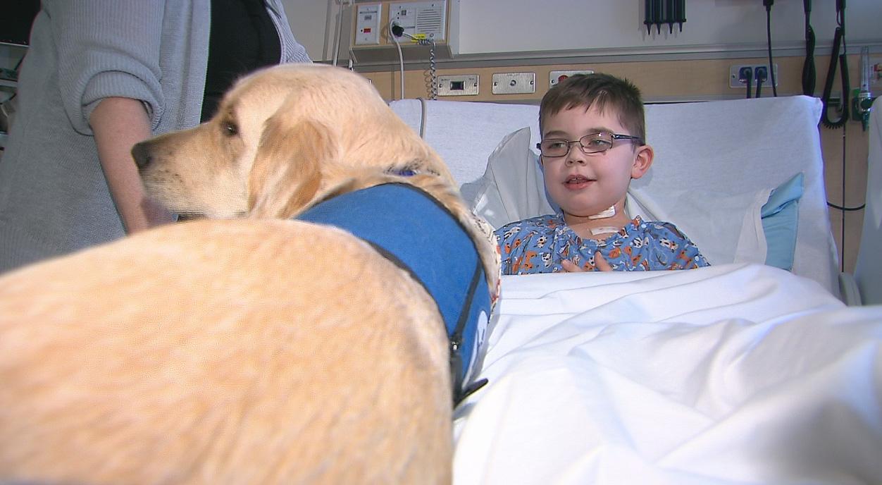 OHSU Hope therapy dog_142666