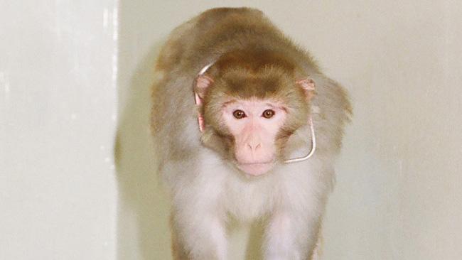 monkey-2-ohsu_147210