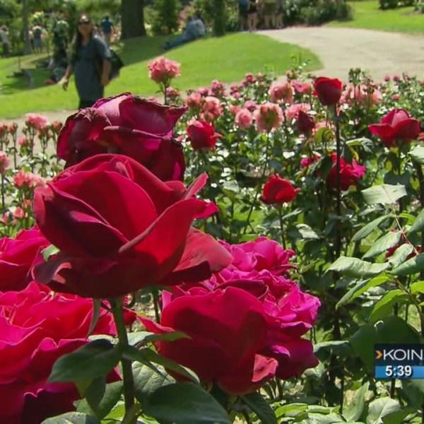 Where We Live: The Portland Rose Festival