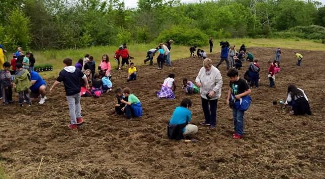 Students planting milkweed, lavender in Fairview to help the honeybees and butterflies, June 1, 2015 (Facebook)