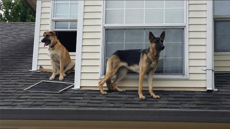 Hazel Dell Dogs CCSO 1_174178