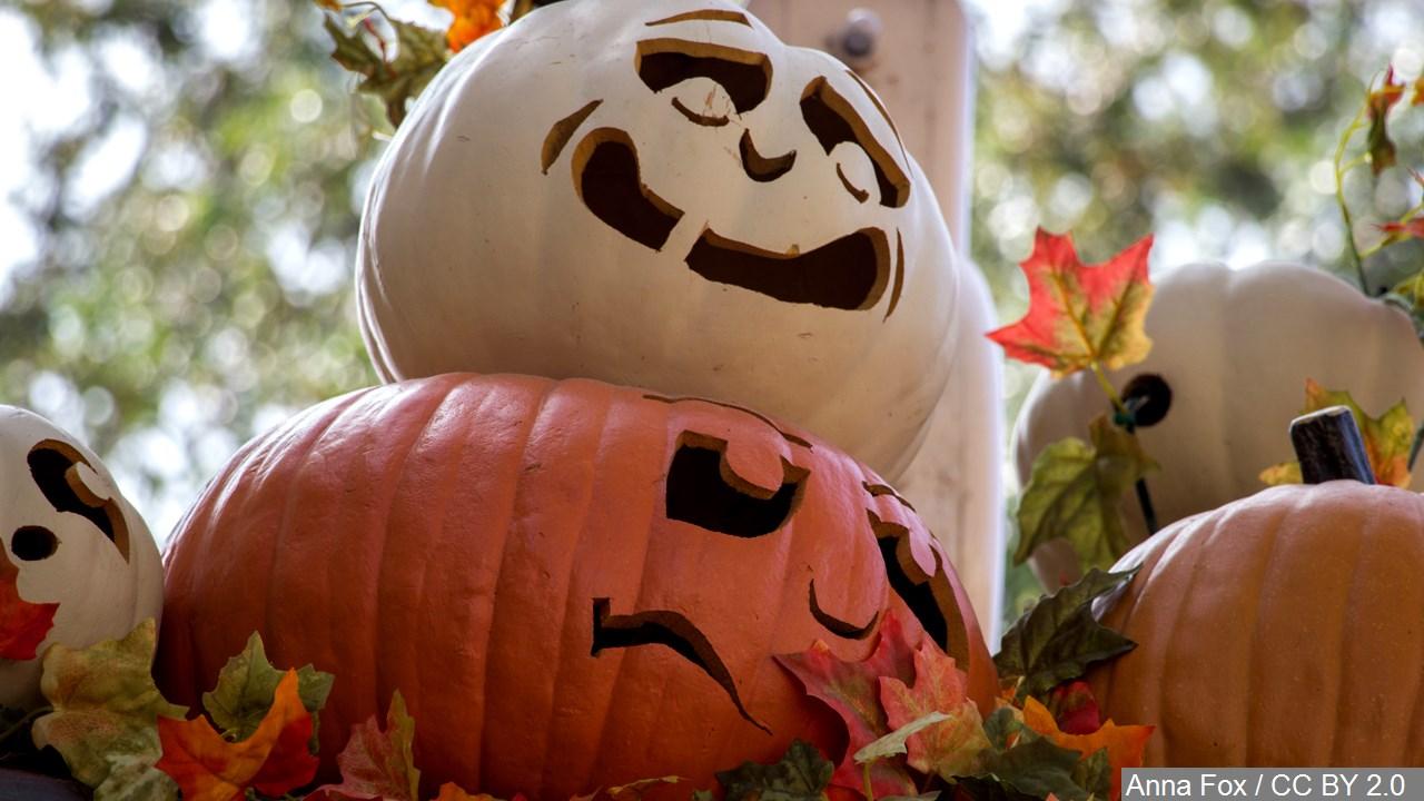 Halloween pumpkins. (MGN Online)_223120