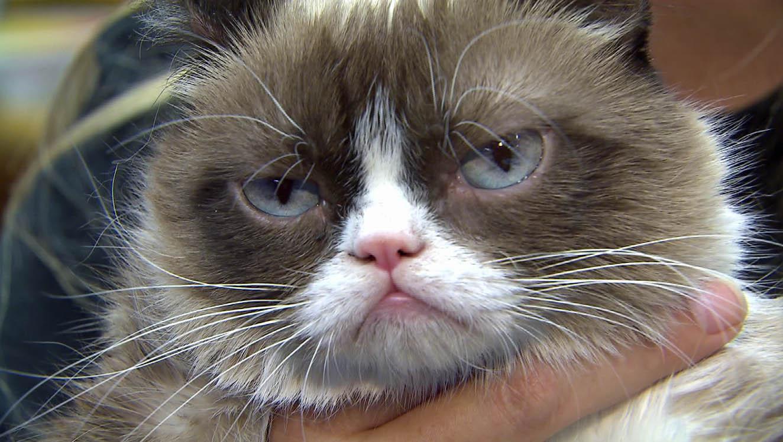 grumpy cat thumb_216370