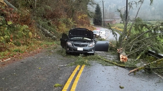 A tree fell on a passing car in Snohomish County, Wash., killing the driver, Nov. 17, 2015 (SNOHOMISH CO. SHERIFF)