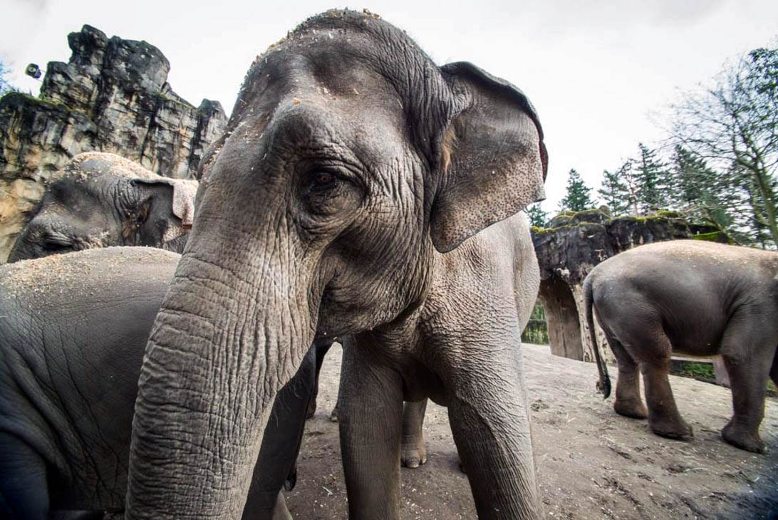 oregon zoo elephant 1_261145