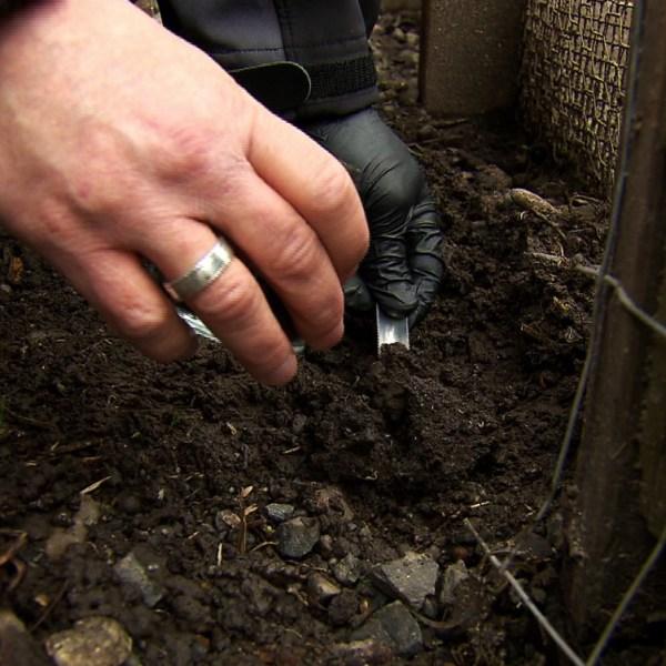 soil sample_272201