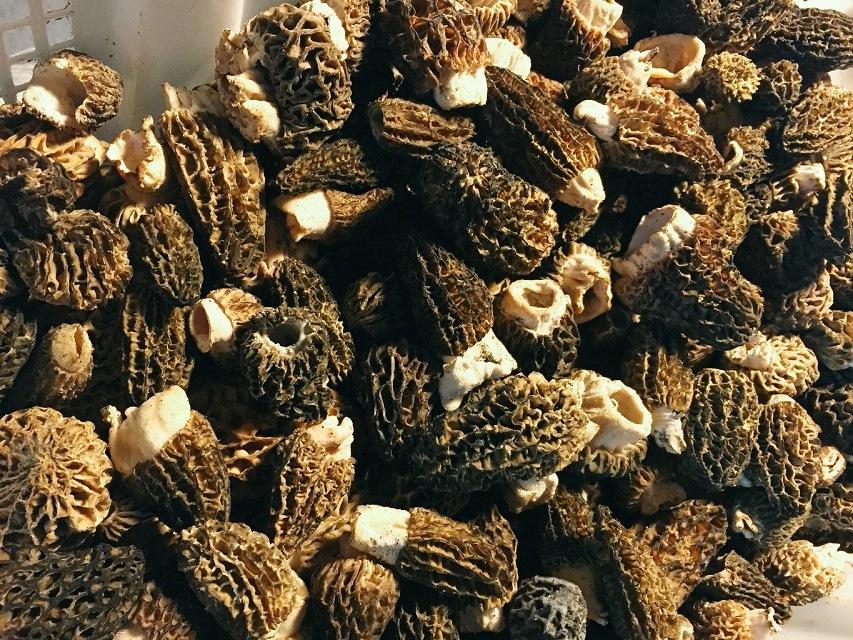 Mushrooms_308917