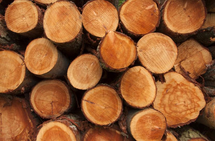 timber logs_323981