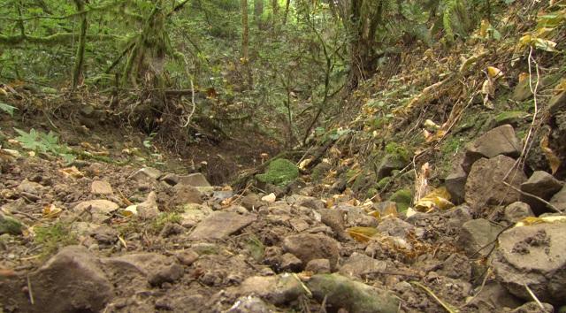 A culvert in Forest Park in Northwest Portland, August 31, 2016 (KOIN)