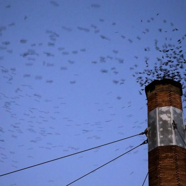 Migratory Bird Decline_352786