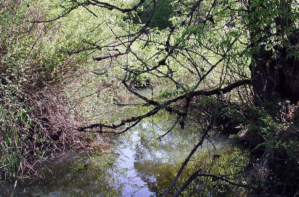 fanno-creek_396071