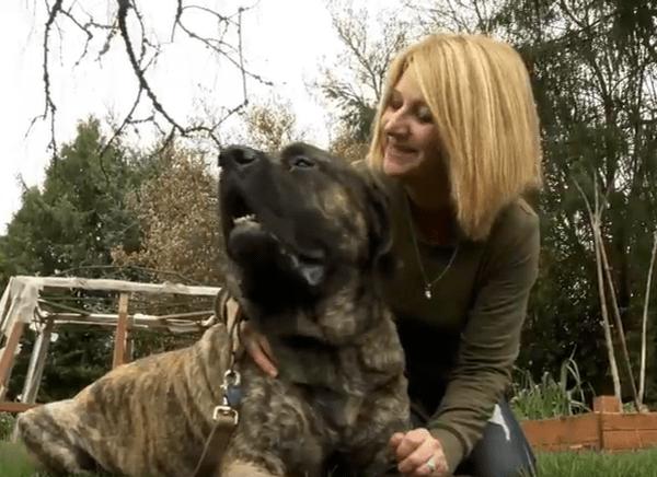 Mastiff Rescue Oregon_456437