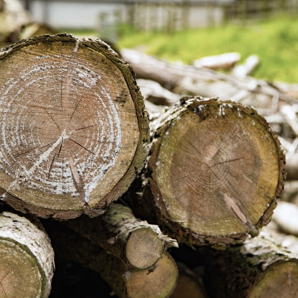 A pile of trees generic logging logs_489371