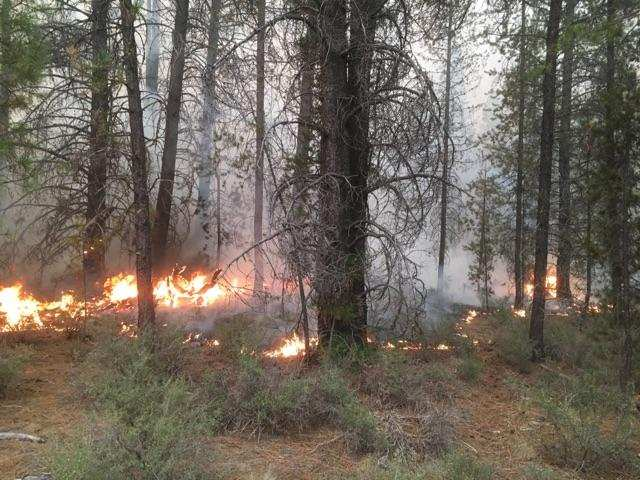 The McKay Fire near La Pine, grew to approximately 1,219 acres, August 30, 2017 (USFS)