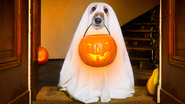 Halloween Ghost Dog Trick Or Treat_541460