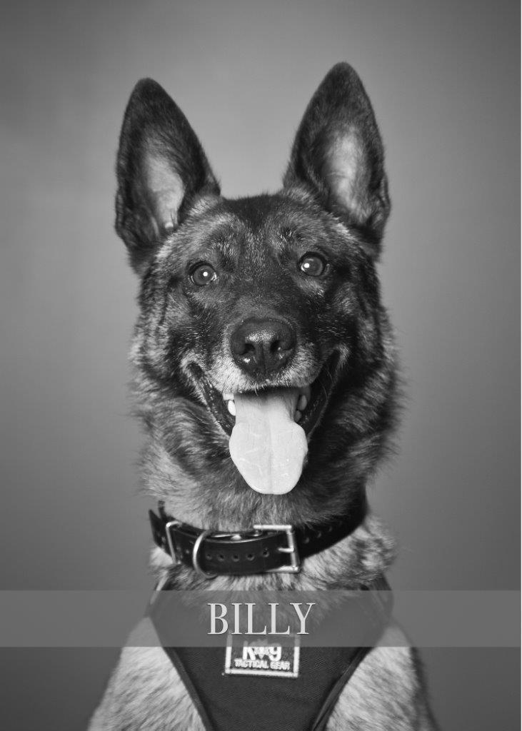"""Hillsboro Police K-9 """"Billy"""" shown in an official photo released by the Hillsboro Police Department."""