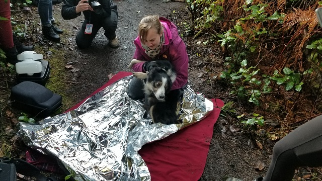 felix the dog rescue c 12262017_573087