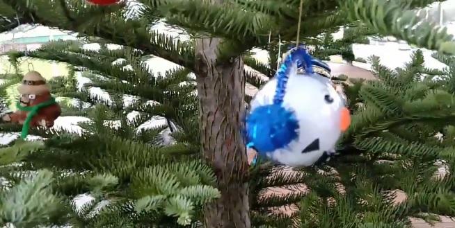 Jan. 19, 2021 And Christmas Tree And Sweet Home Oregon Sweet Home Fir To Be Us Capitol Christmas Tree
