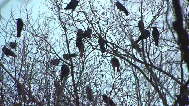 generic crows 01072015_111637