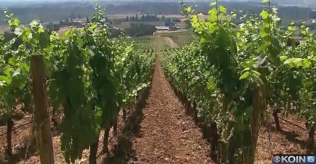 generic stoller vineyard c 07272018_1532738163017.jpg.jpg