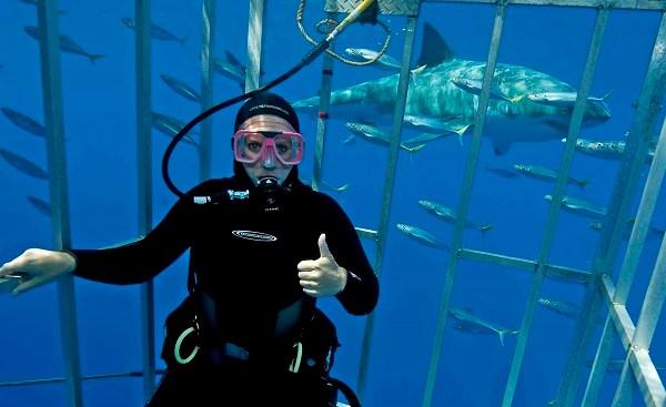 natasha great white shark