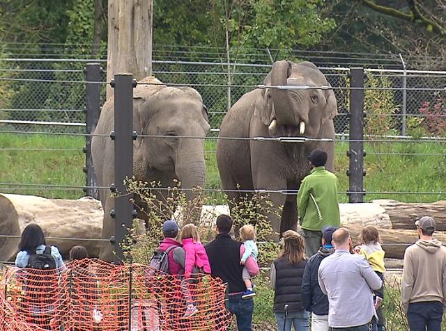 Oregon zoo elephants 03312018 A