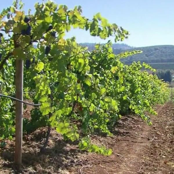 generic winery_1537831491415.jpg.jpg