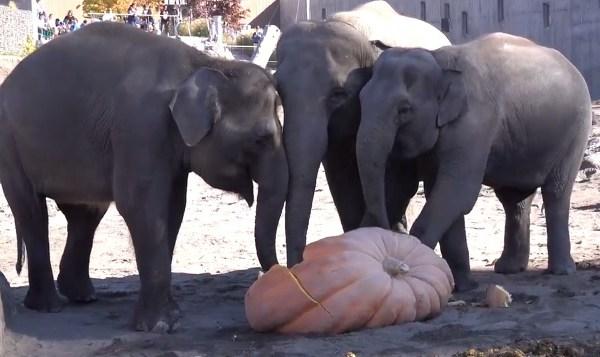oregon zoo elephants_1540075211310.jpg.jpg