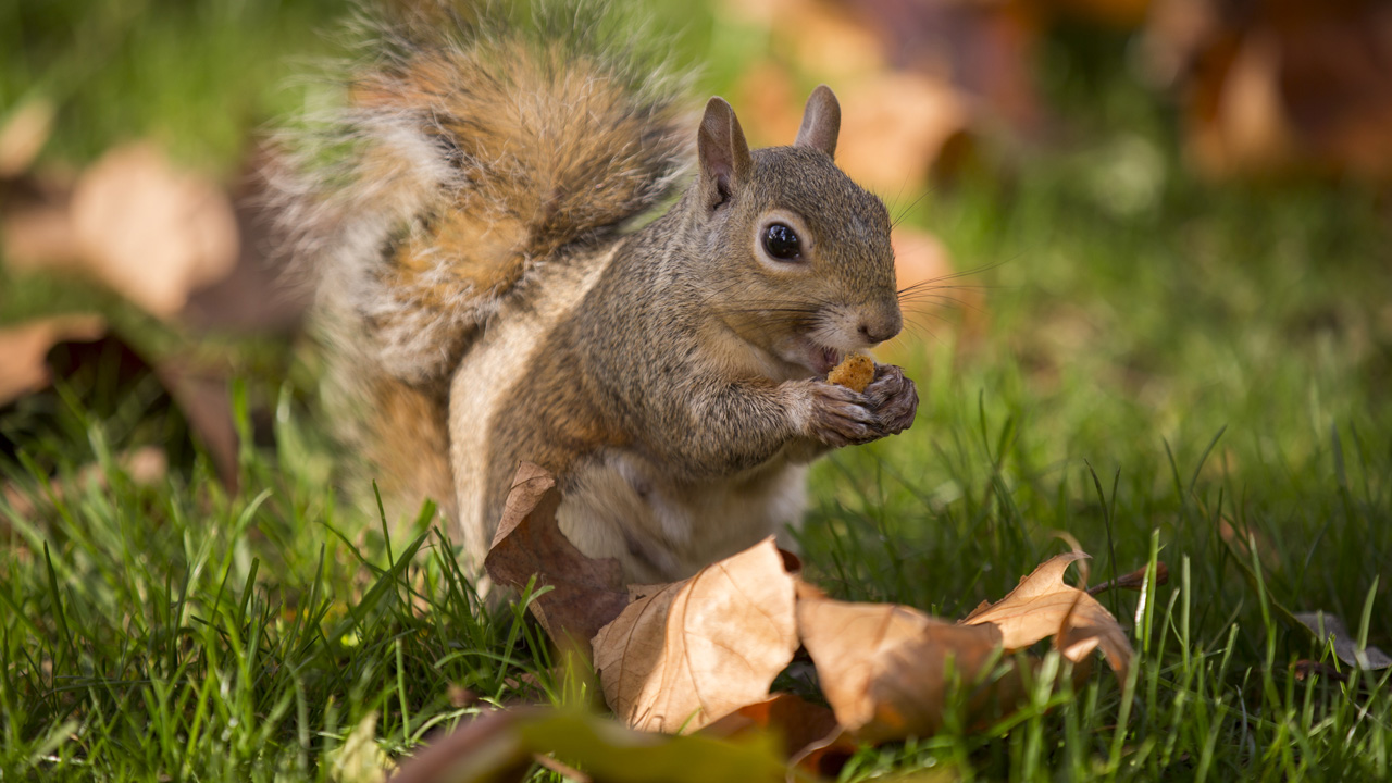 squirrel_1539139386242-873772846.jpg