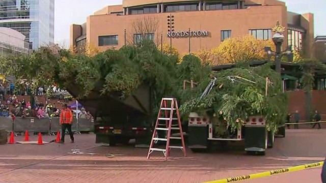 Tree arriving in Portland, officially kicks off holidays
