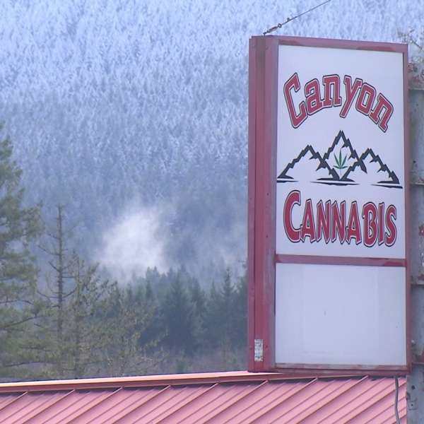 canyon cannabis_1550350376220.jpg.jpg