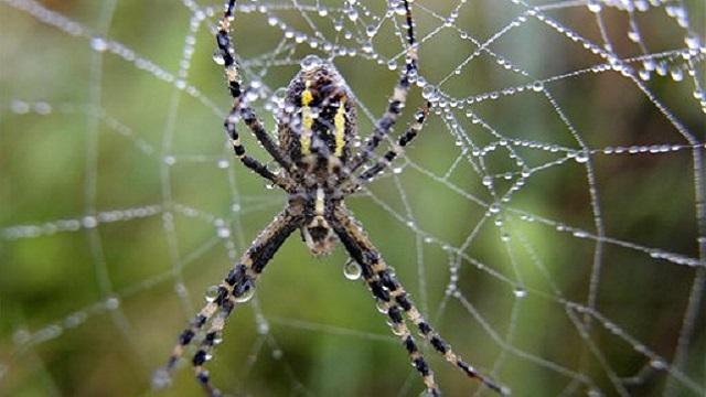 generic spider web arachnid