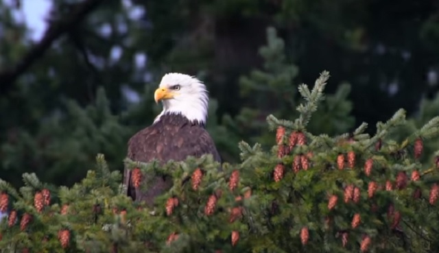 generic bald eagle oregon zoo 03202019_1553191898220.jpg.jpg