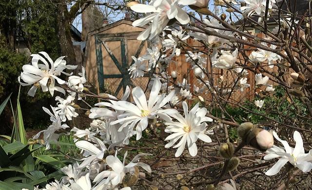 generic spring flowers_1553709468810.jpeg.jpg