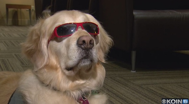 generic sunglasses dog 12242018_1545698609292.jpg.jpg