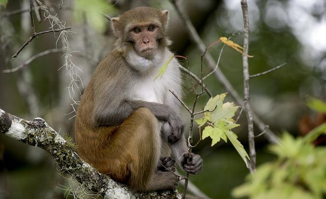 Florida Wild Monkeys Virus_1553210994822