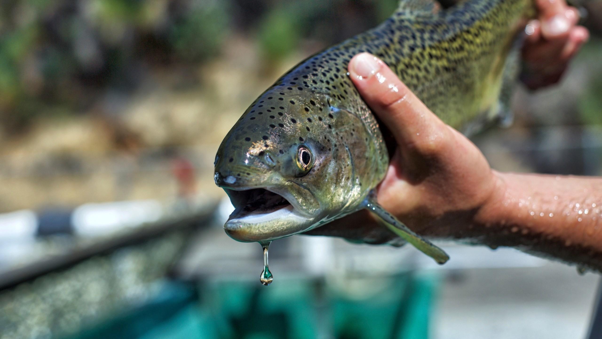 California_Salmon_Dams_27800-159532.jpg12536696