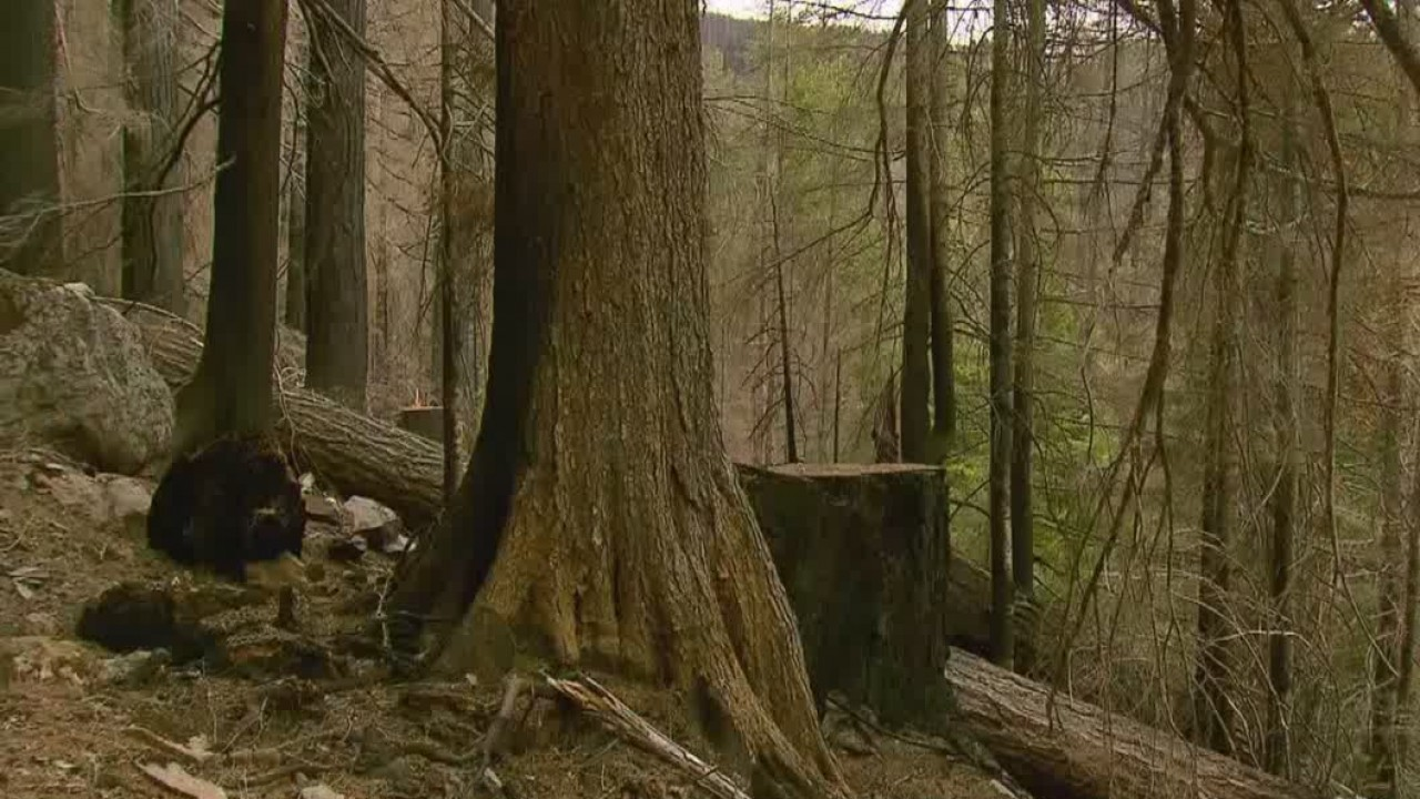 Whitewater_Trail_remains_closed_as_fire__1_20180614001823