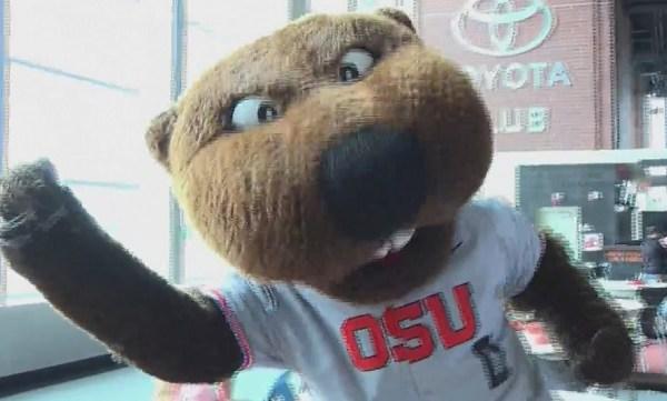 osu beavers mascot 05272019_1558984391609.jpg.jpg