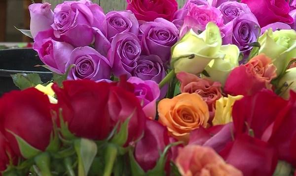 the bloom project 05082019 2_1557384269924.jpg.jpg