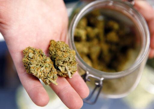 Marijuana buds
