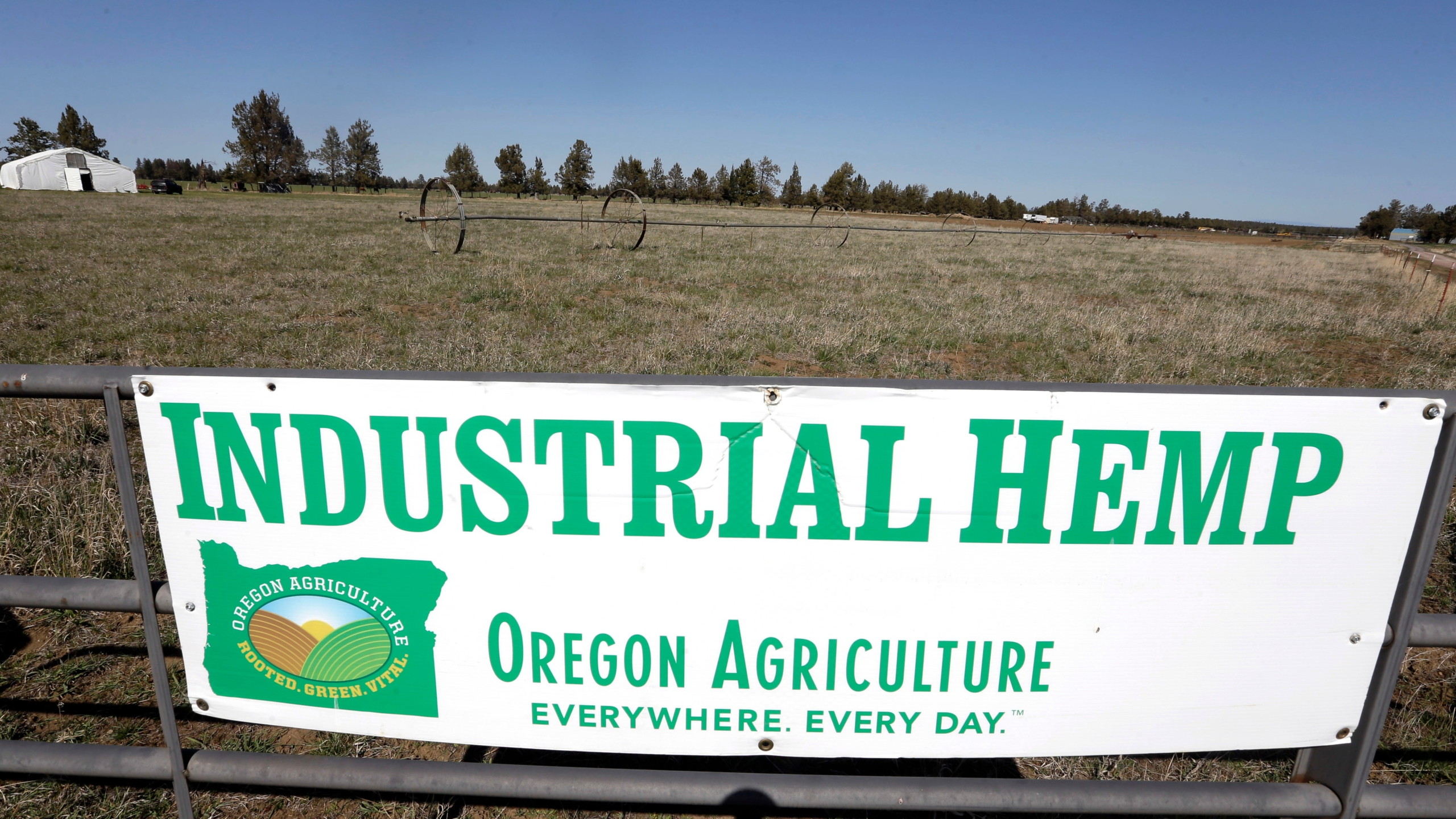 Dreams of growing hemp in Oregon go up in smoke