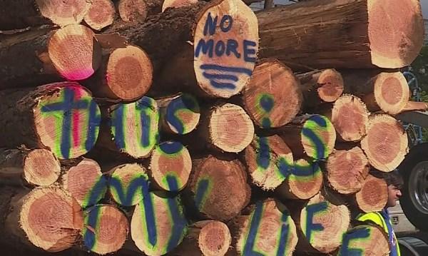 loggers timber hb2020 b 06192019_1560971363784.jpg.jpg