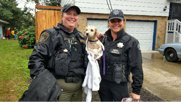 Dog rescued from Gresham cliff-side