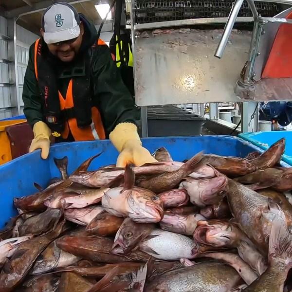 warrenton pacific seafood 10072019