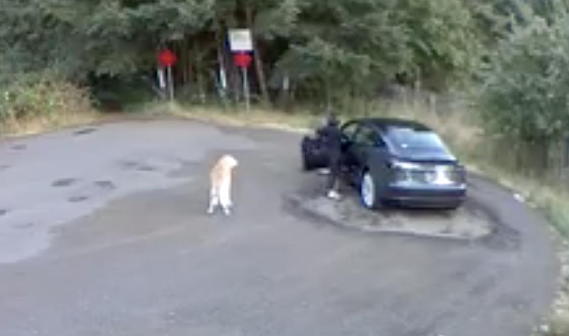 Portland woman admits to dumping dog at Vancouver park - Portland, Oregon -  Eminetra