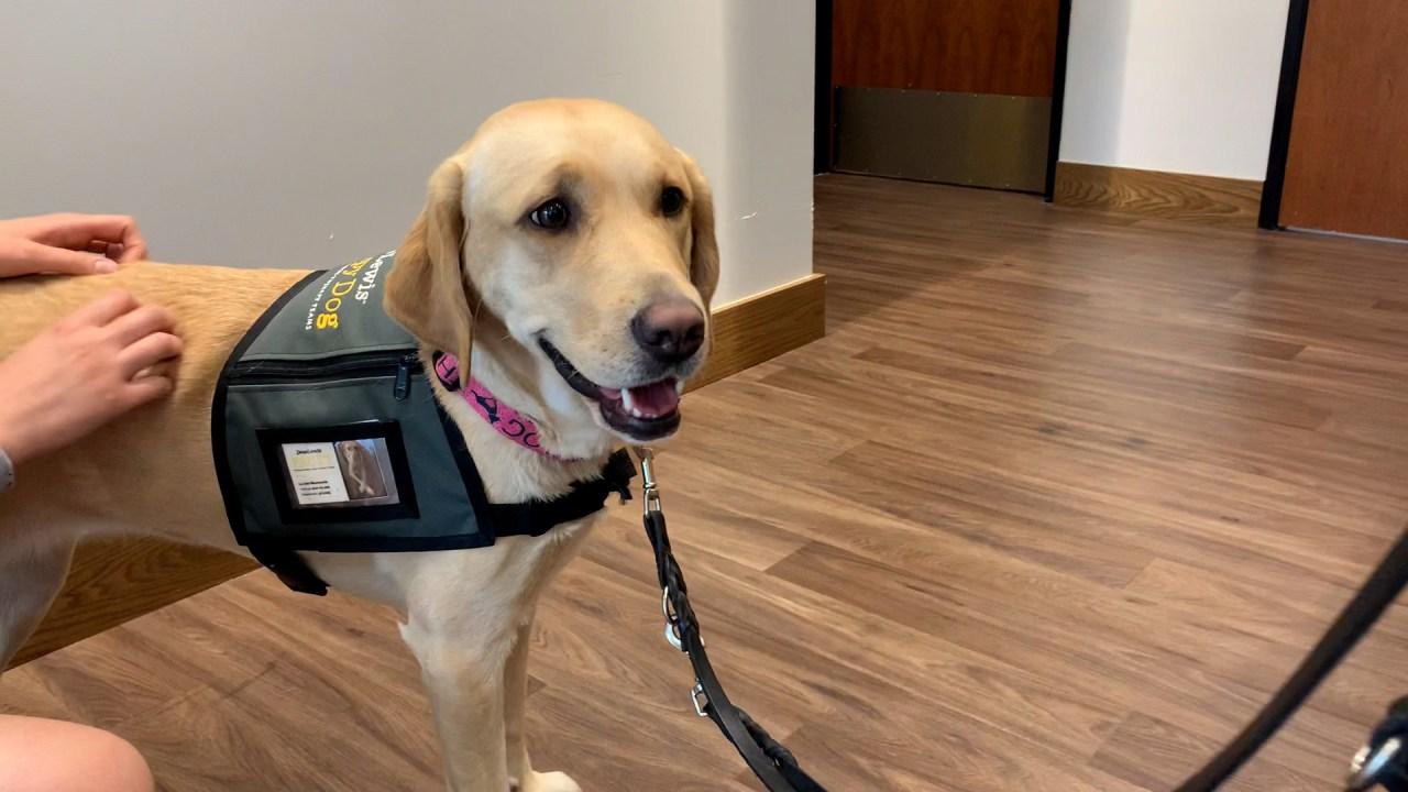 Good boy: Assistance dogs celebrated in Portland, internationally